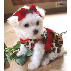 Dear Santa, I SUPER need this puppy!! K thanks Me