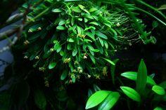 Orchids in Bloom: Orchidarium Changes
