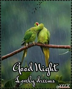 Good Night For Him, Good Night Moon, Good Night Image, Good Night Beautiful, Beautiful Gif, I Love You Quotes, Love Yourself Quotes, Good Night Prayer Quotes, Good Morning Wishes Friends