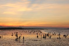 Clam Digging Cadiz City, Clam, Philippines, Culture, Celestial, Sunset, Beach, Water, Outdoor
