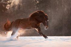 Horses In Snow, Cute Horses, Beautiful Horses, Noriker Horse, Cat Farm, Horse Breeds, Horse Photography, Rock Climbing, Brownies