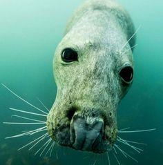 Seal photo by Adam Hanron