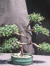 Bonsia Bonsai Plants, Bonsai Trees, French Beaded Flowers, Fun Crafts, Sculpture, Gift Ideas, Garden, Pretty, Food