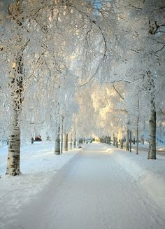 Path draped in white.
