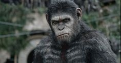 Andy Serkis returns as genetically enhanced ape Caesar in the trailer for Dawn of the Planet of the Apes. War will determine who will rule the planet, apes or humans. Dawn Of The Planet, Planet Of The Apes, Transformers 4, George Mackay, Pugs, Animal Flow, Matt Reeves, Motion Capture, Chimpanzee