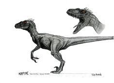 Male Velociraptor