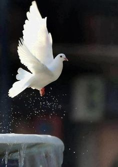 "Come Holy Spirit. Come. Help us to raise the consciousness and MAKE PEACE. Together we can change the old narratives and bust the old myths. We have been given this beautiful Earth, and each other to honour, protect and cherish...""Peace on Earth, goodwill to All """