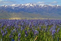 The vibrant display attracts photographers, bird watchers, and wildflower enthusiasts alike from all over the state.