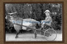 Friend or family?  We don't know but the goat cart picture is very sweet.