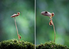 """Ni végétaux, ni animaux, les champignons sont des êtres vivants exceptionnels et mystérieux. Aujourd'hui, DGS vous présente 25 sublimes photographies de """"funji"""" en plein automne.Vyacheslav Mishchenko est un photographe ukrainien spécialiste..."""