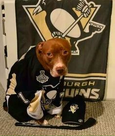 This super-fan pup takes losses extra hard. Photo courtesy of Twitter user @zykin9.