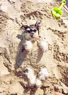 """Covered in just a """"little"""" bit of sand!"""