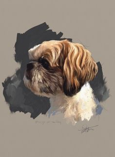 Animal Drawings Portrait study of a dog named Scoby - Painting dog portraits is something I've done for as long as I can remember. I love painting dogs because they teach us so much about being human. Creature Drawings, Animal Drawings, Animal Art Projects, Shih Tzu Dog, Havanese Dogs, Pekingese, Yorkie, Watercolor Animals, Dog Portraits