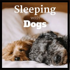 This ultimate guide on sleeping with dogs answers everything you need to know including the benefits (and the safety) of having dogs in bed, how to get your dog on (or off) the bed, and many more. Click to check it out.