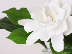 Diese Pflanzen helfen dir dabei, besser zu schlafen: Gardenie