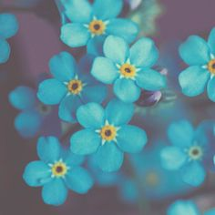 Flower Photo Forget me not  8x8 Fine Art Macro by MarianneLoMonaco, $25.00