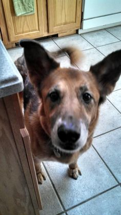Lady. 13 year old Shepard Husky mix. Took off from Edith Lane Rutland Ma. Please! ! She's quite skiddish but is very sweet! . Bonnie Antinovitch. 774-239-8521. Thank you so much!