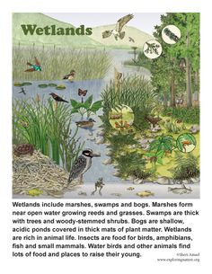 Learn about animals, plants and habitats with simple, fun activities on Exploringnature.org Pond Covers, Growing Grass, Pitcher Plant, Plant Science, Biomes, Environmental Science, Amphibians, Ecology, Cactus Plants