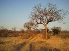Bushveld scenery. Klaserie Nature Reserve, Limpopo Province, South Africa. Photo by Martie van Niekerk