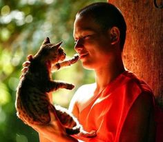 Cat and Buddhist monk