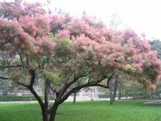 nameless tree