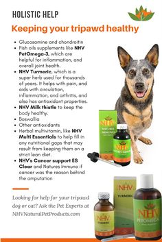 A holistic vet explains the best way to keep a tripawd pet healthy and safe. Are you looking for holistic help for your tripawd pup or cat - get in touch with NHV Pet Experts.