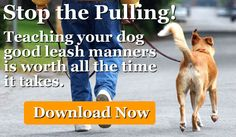 Whole Dog Journal's WALKING YOUR DOG-- Free e-book download