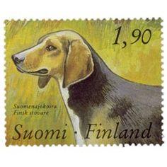 Kenneltoiminta 100 vuotta - Suomenajokoira