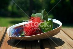 Pohutakawa and Paua, New Zealand Summer or Christmas Background Royalty Free Stock Photo Summer Christmas, Christmas Background, New Zealand, Serving Bowls, Flower Arrangements, Royalty Free Stock Photos, Tableware, Flowers, Photography