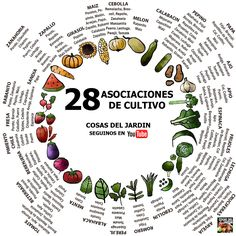 Cómo es la asociación de cultivos - Son 3 trucos y entendés todo @cosasdeljardin - Cosas del Jardin