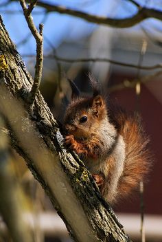 Baby squirrel!!! ~ Sarah's Country Kitchen ~
