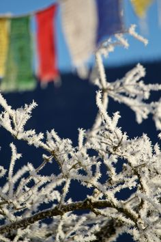 Frost in the Morning! Frost, Nature, Jewelry, Naturaleza, Jewlery, Jewerly, Schmuck, Jewels, Jewelery