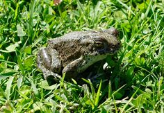 Mr toad by Antony