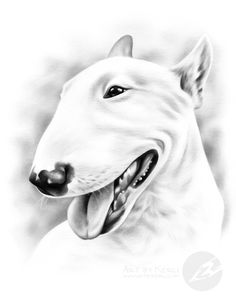 """Falcao"" - bull terrier graphite pencil drawing by Kerli Toode 