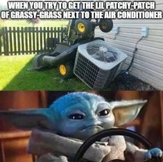 Yoda Images, Funny Images, Funny Pictures, Yoda Meme, Yoda Funny, Funny Pets, Funny Laugh, Hilarious, Good Morning Image Quotes