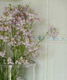 ~ fleurs des champs ~