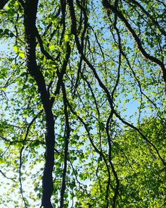 Spring trees :) may green and beautiful day in nature
