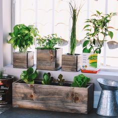 A Little Veggie Can Go A Long Way! Regrow Your Vegetable Scraps Right in Your Own Kitchen