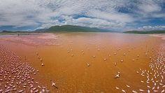 Las fotografías más impresionantes del planeta. Flamencos en el Lago Bogoria