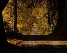 A lonely walker by Petri Forss