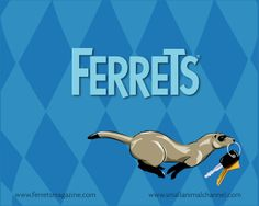 Gliders Ferret Wallpaper - Your HD Wallpaper #ID64055 (shared via SlingPic)