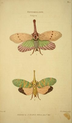The museum of natural history :. London :Printed by George Smeeton for James Stratford,1811