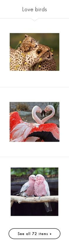 """""""Love birds"""" by lioncat ❤ liked on Polyvore featuring animals, pictures, cute animals, cat, animais, backgrounds, birds, photos, owls and fillers"""