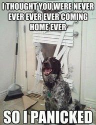 If this was a cat and not a dog, this would definitely be Charlie! Life is in complete disarray every time I come home!