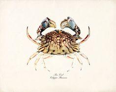 pretty crab