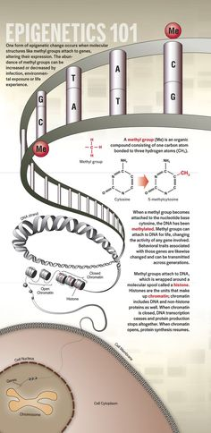 Grandma's Experiences Leave Epigenetic Mark on Your Genes   http://DiscoverMagazine.com
