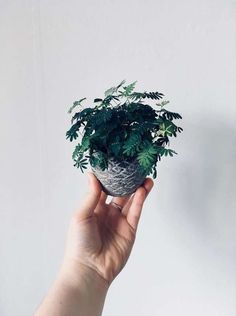 Oddly Intriguing Indoor Plants You've Probably Never Heard Of Unus. - Oddly Intriguing Indoor Plants You've Probably Never Heard Of Unusual Indoor House Pl -