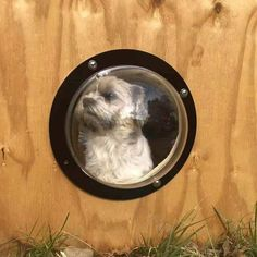 Dog Fences Transparent Acrylic Bubble Window Cat Clear View Dome Pet Peek Window, Prevent Dogs From Jumping Over pet dog fences Dog Window In Fence, Dog Fence, Pet Dogs, Dog Cat, Pets, Dog Shampoo, Dog Carrier, Dog Costumes, Dog Boarding