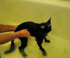 animais - gato