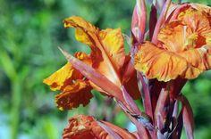 Lovely Orange Blossoms!
